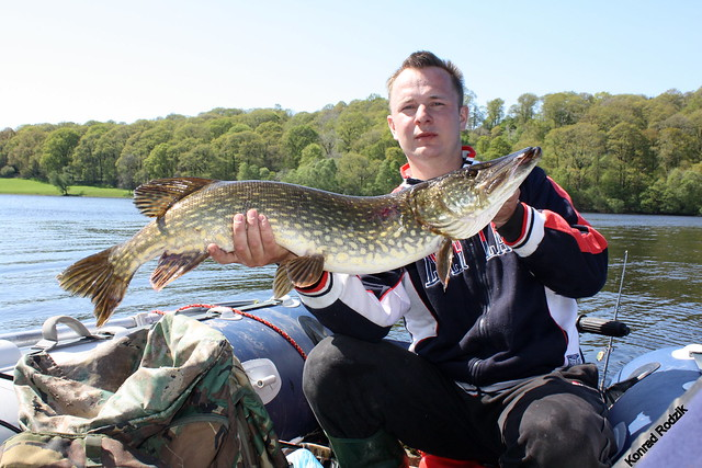 Loch Ken Pike 97cm