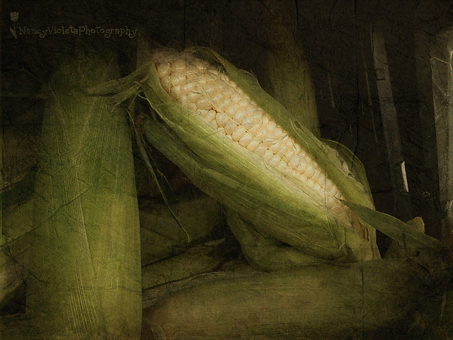 History is gone... time for some corn (Cachapa's recipe)