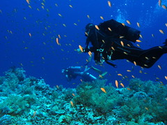 Byron Bay Introductory Scuba Diving
