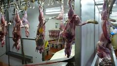 slaughterhouse,