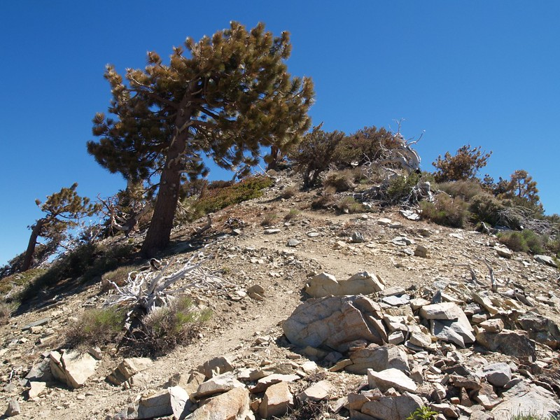 Telegraph Peak summit trail - The last fast switchbacks up to the summit
