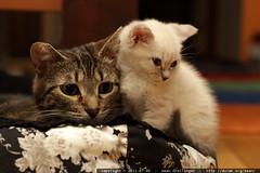 snowball & babykitty sharing a kitty bed