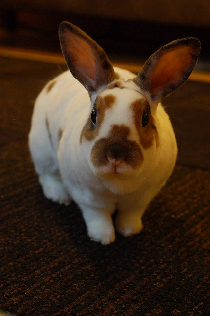 Let s start the day with a bunny! Flickr - Photo Sharing!