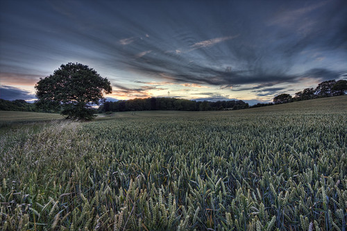 uk sunset england sky tree unitedkingdom stevenage hdr canon1022 tonemapped canon450d chesfield thelasttreeontheleft