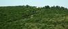 himara hills