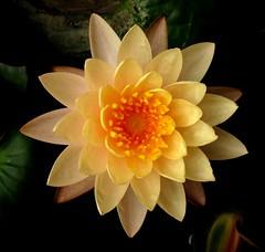 Thailand - Flowers