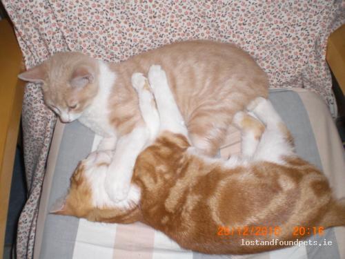 Sat, Jul 9th, 2011 Lost Male Cat - Tinnecarrig, Newbawn, Wexford
