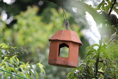 branch, leaf, birdhouse, green, jungle,