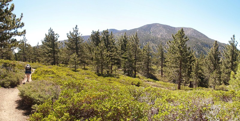 San Bernardino Peak Trail panorama - a view of San Bernardino Peak from Manzanita Flat