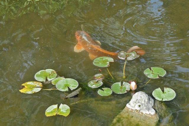 Flickr photo sharing - Stephane sauvage jardin boulogne billancourt ...