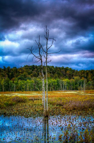 sky tree colors landscape marsh hdr jasonmanion canonrebelt3i