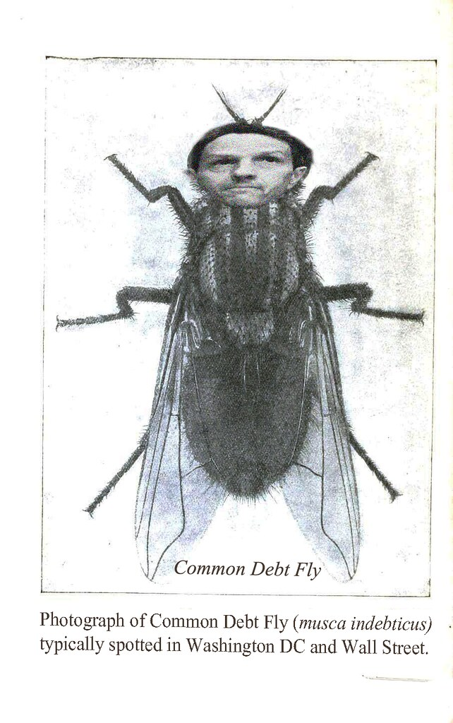 COMMON DEBT FLY