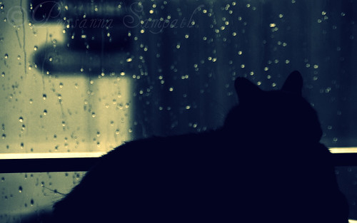 cat enjoying the monsoon