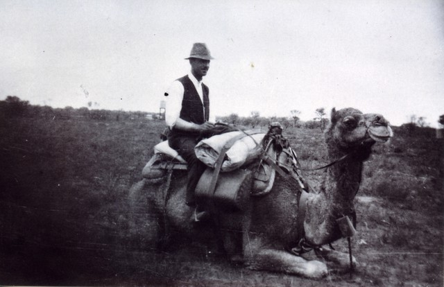 1921  C.M. Hambidge on camel at the southern S.A.W.A. survey camp - KHS-2011-15-20-P2-D