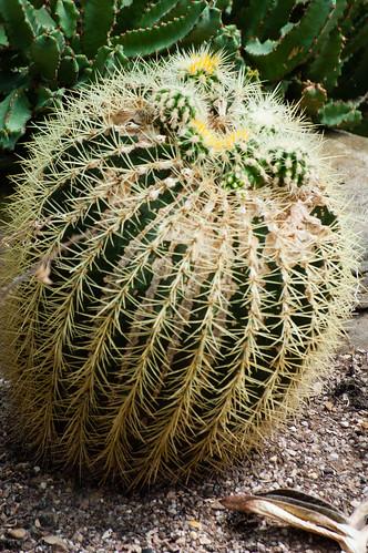 Access all areas 2 - cactus