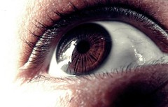iris, contact lens, brown, eyelash, close-up, eye, organ,