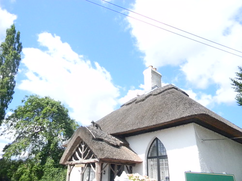 Cat on a hot thatched roof