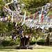 Prayer flags at Lumbini, Buddha's birthplace (Rajan Jolly)