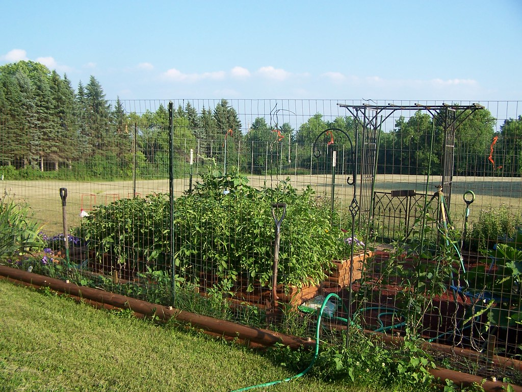 Vegetable garden deer fence ideas - Vegetable Garden Fence Ideas Rabbits They Damaged The Fence Trying