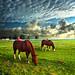 Hailey's Horses
