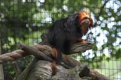 animal, zoo, primate, fauna,
