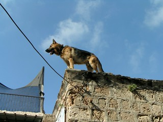 Dog on Building