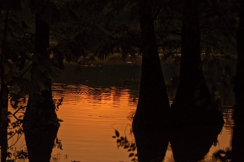 trees sunset reflection tree silhouette cypress mygearandme musictomyeyeslevel1