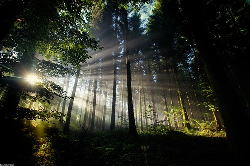 Quand le soleil éclaire la foret de ces rayons ** When the sun lights the forest of these rays **