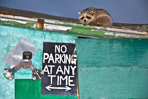 No parking... or else!