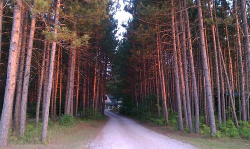 camping trees sunset forest drive woods path michigan trail driveway pines koa kalkaska nicelight deepwoods