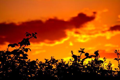 sunset orange nature silhouette night clouds oregon weeds cloudy skyshots stayton colororangered