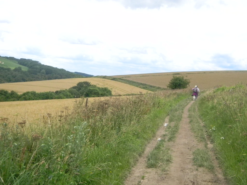 Along the SDW Amberley to Pulborough