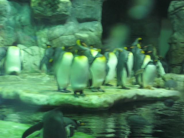 Moody Gardens Aquarium Galveston Texas Flickr Photo