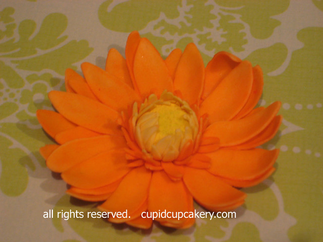 Orange Gerber Daisy by Cupid