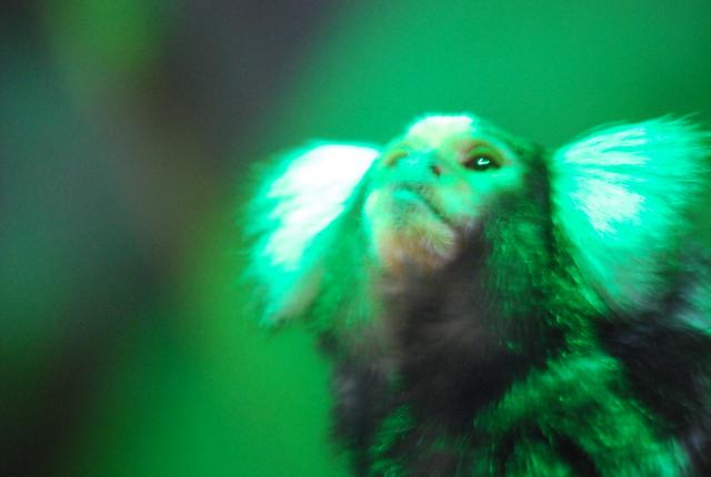 Mono en el acuario de Bergen