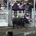 Sarpy Fair Rodeo 463