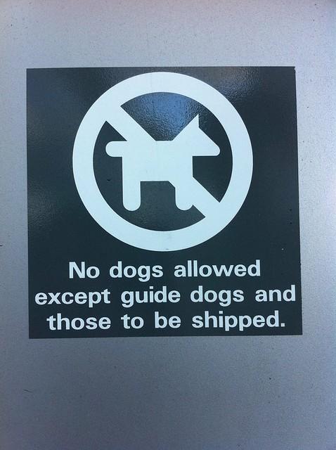 Dogs Allowed In Restaurants - Roni The Travel Guru