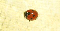 Ladybird or Ladybug in the kitchen