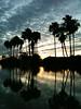 Bayview Resaca palms May 2011