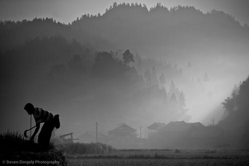 bw man fog sunrise dawn farmer paddyfield dimen dongminority chinaguizhou