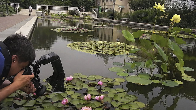 A visitor leans in for a close-up in this still image from the Lily Pool Terrace time-lapse video.  Photo by Dave Allen.