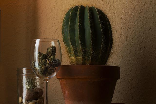 Marijuana, terrarium, cactus (2011)