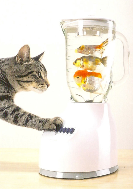 Cats with fish in a blender flickr photo sharing for Fish in a blender
