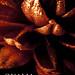 Qualia Promotional Material