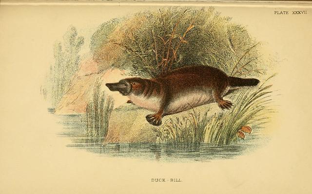 Nature & Natural History - Old Book Art
