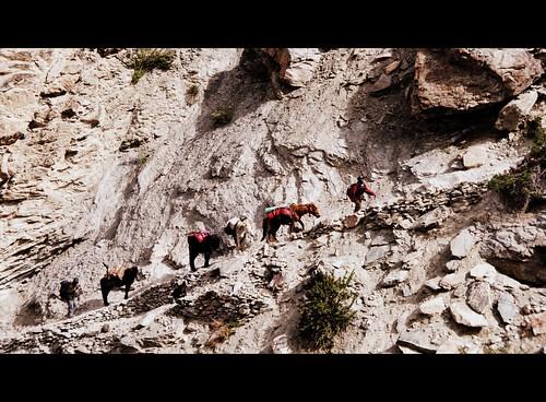 Raru to Phuktal, Zanskar 2010