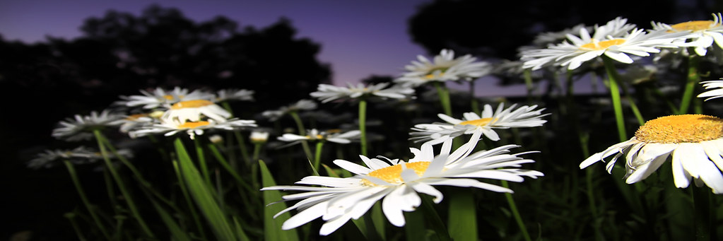 Twilight Flowers Panorama