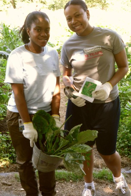 BBG's Senior Garden Apprentices lead Goldman Sachs volunteers in a weed identification game. Photo by Kathryn Littlefield.