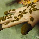 Mehndi (Henna) Encrusted on Hand - Hatiandha, Bangladesh