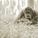Zoo Amnéville-2011- 282 ©mfld57